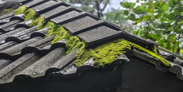 Roof shingle - Roof